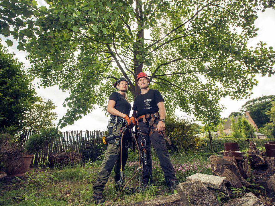 boomsnoeier oost-vlaanderen
