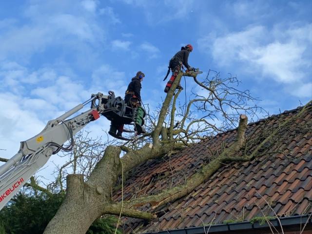 storm boom opruimen
