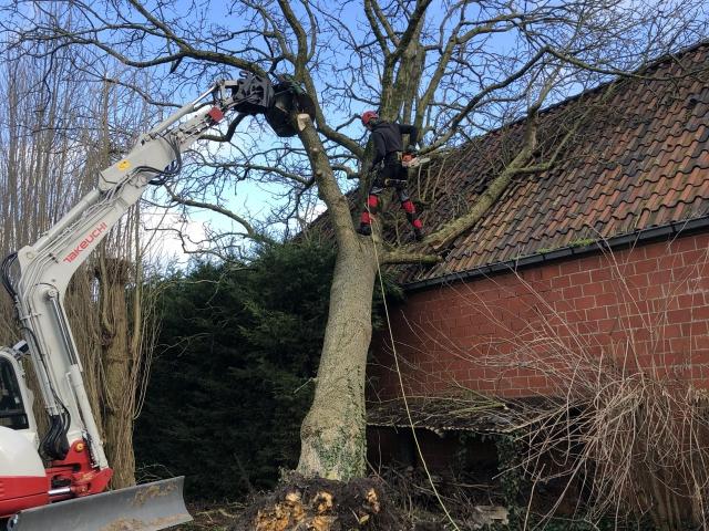 stormschade boom opruimen